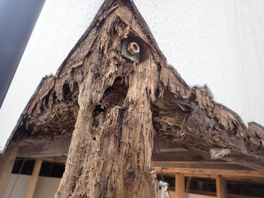 木造の白蟻被害
