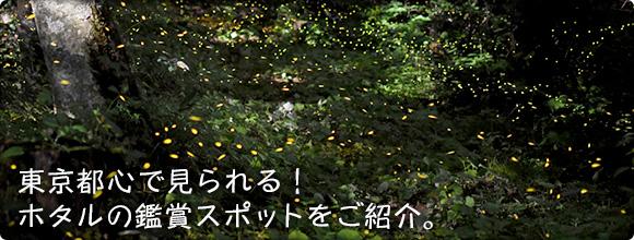 東京都心で見られる! ホタルの鑑賞スポットをご紹介。