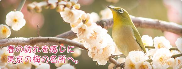 春の訪れを感じに、東京の梅の名所へ。