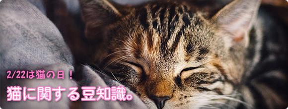 2/22は猫の日!猫に関する豆知識。