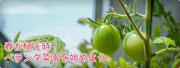 春が植え時!ベランダ菜園を始めよう。